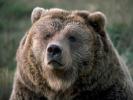 Bjørn skudt efter at have dræbt menneske