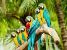 Læs om papegøjer!